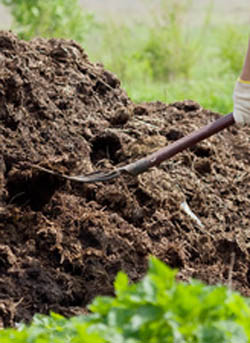 Add lots of composted animal manure