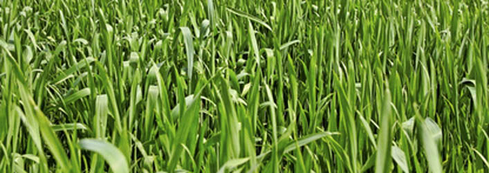 Plant a fall rye to keep weeds down through fall and winter.