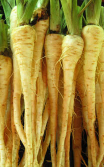 Parsnip planted in June harvested December and January