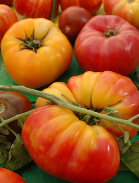 Some say heirloom tomato seed are king