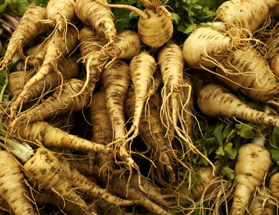 These parsnips will be ready late fall and through the winter