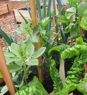 Raised garden beds in a community garden