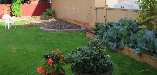 Our backyard garden in transition