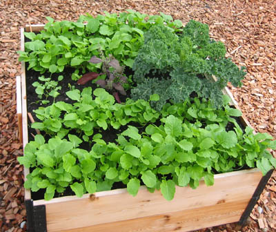 A productive raised garden bed .