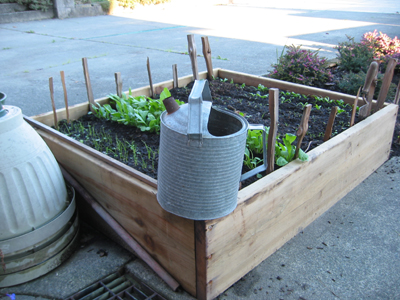 Cool weather vegetables in a raised gardenbed