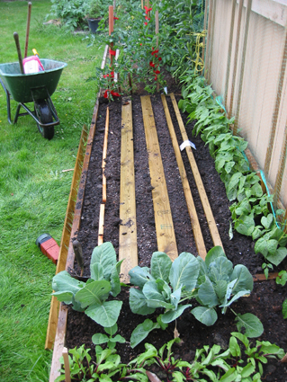 Backyard Ideas and the How to Grow Vegetables Quest