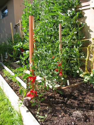 raise garden bed with a mix of growing vegetables including carrots, broad beans, and tomatoes