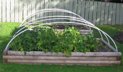 Maybe this raised-garden bed is deer proofed.