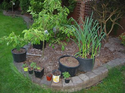 container vegetable garden in our backyard