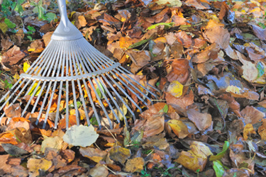 Leaves are free and help make compost