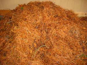 Dries pine needles is good for mulch