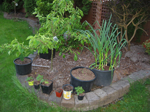 Growing ve ables in containers is like raised bed gardening but