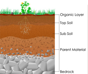 Types of soil found in backyard gardens and how to amend it for What is important to know about soil layers