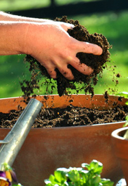 Regular garden soil is too heavy for growing vegetables in containers
