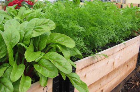 Raised garden beds are ideal for small community gardens.