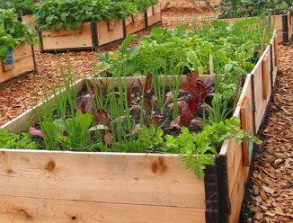 Raised bed gardening ... A great way of growing vegetables in community gardens