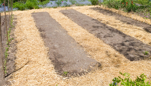 straw mulch on foot paths prevents soil compaction