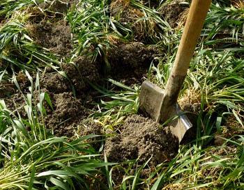 A sharp edge on this shovel makes the work easier.